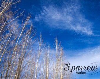 Nature Photography, Cottonwoods, Winter, Blue Sky, Clear