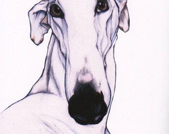 greyhound art print, sighthound art, signed giclée print, white greyhound wall art, greyhound in art, fine art print,greyhound drawing