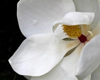 Satin Flora