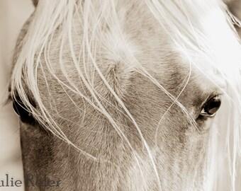 Sepia Horse Photograph