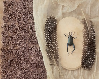 P.S. 2 - FREE SHIPPING Fine Art Photo Print Still Life Insect Blue Green Beetle Pink Rose Fabric Feathers Creepy Surreal Nature Wall Decor