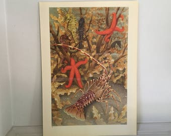 1945 OCEAN LIFE LITHOGRAPH - original vintage print - large size underwater sea life scene print - crawfish, starfish, and seahorses
