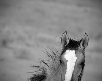 Wild mustang photo, barn decor, rustic wall art, horse photo, equine art, wild horse photo, equine art, ranch decor, horse art, equestrian