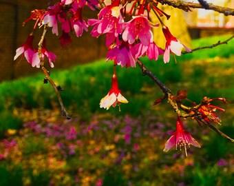 Les Fleurs #39 Fuschia Photograph