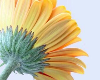 Gerbera Daisy Print, Flower Print, Daisy Photo, Daisy Picture, Flower Print, Yellow Daisy Print, Yellow Daisy Photo, Flower Photo, Daisy