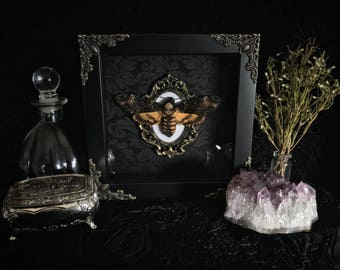 Deaths Head Moth Shadow Box, Taxidermy, Real Butterfly, Framed Butterfly, Preserved Butterfly, Victorian, Memento Mori, Gothic Decor
