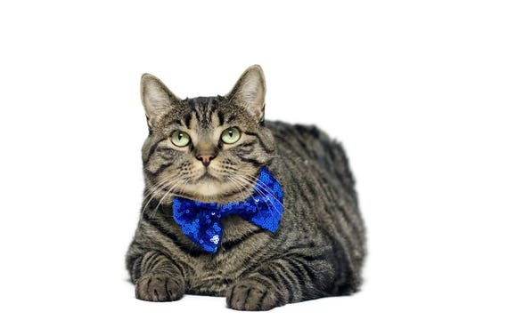Cat Bow Tie    Bowtie for Kitty    Pet Bow Tie    Cat Costume