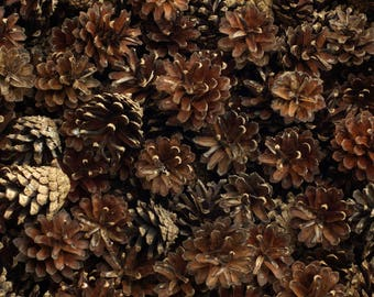 25 Pine Cones - Mixed Whole Dried for Weddings, Craft, Table Decor, Home Décor. Mixed Size. Pinecones, Natural, Biodegradable, PineCones,