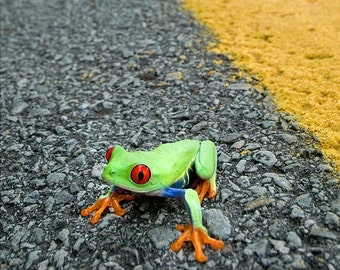 Frog Crossing Road Wall Art, Frog Humor