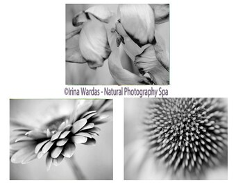 Grey flower photography prints,  grey wall art set, floral print set of 3 11x14, 8x10 photo prints, floral pictures grey bathroom wall decor