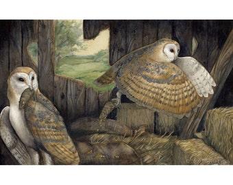ORIGINAL PAINTING - Barn Owl Mousers - Wildlife Bird Art