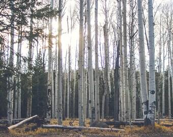 Forest Photography, Sunbeams Print, Loft Decor, Bar Wall Art, Tree Photograph, Nature, Autumn trees, Muted Tones, Home Decor