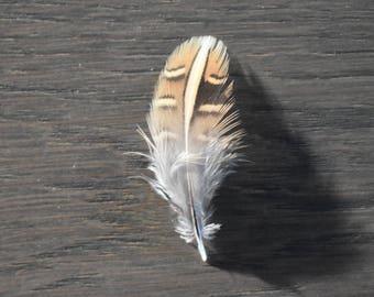 10 × 3 pheasant feathery chocolates / 3cm