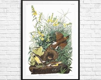 Meadow Lark, Meadow Larks, bird prints, bird posters, bird art, ornithology gifts, birdwatcher gifts, John Audubon, Audubon book, book birds
