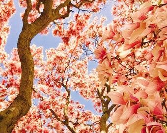 Les Fleurs #4 Magnolias Photograph
