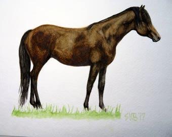 Hoppy- Original Chincoteague Pony Watercolor