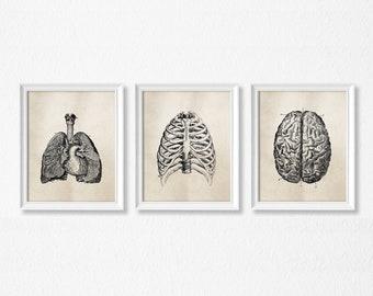 Human Anatomy Wall Art - Set of three - PRINTABLE Art - Vintage Medical Science Art - Office Decor - Medical student - Light Brown