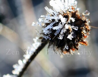 Hoar Frost Photography. Nature Photography Print. Macro Photography. Frost Photo Print, Framed Photography, or Canvas Print. Home Decor.