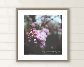Cherry Blossoms photos, spring blossoms, pink flowers picture, floral, mother's day, oversized large wall art, square wall art, Christmas