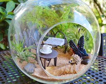 "Hedgehog Terrarium Kit~ 7"" Air Plant Terrarium Kits ~ Sand and Butterfly choice ~ Gift ~ Birthday ~ Fairy Garden Kits ~ Miniature Garden Kit"