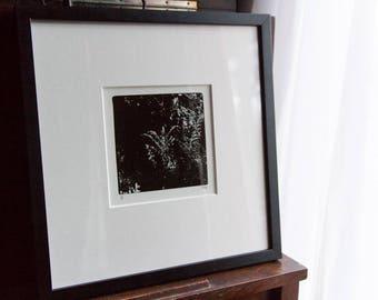 Hello, Divine: Homemade Silver Gelatin Print, Framed, Nature, Feminine, Black & White, Delicate, Female Artist, Limited Edition, Signed