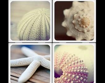 Amelia Kay Photography - Beauty of Sealife Ceramic Coaster Set
