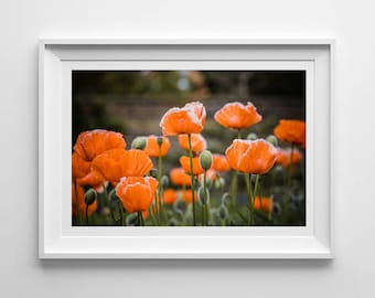 Nature Photography, Orange Poppies, Poppy, Original Print, Floral, Landscape, Botanical Wall Art, Pretty Decor