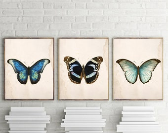 Set of 3 Butterfly Art Prints or Canvases - Vintage Butterfly insect art prints - Butterfly Decor - Entomology Art- Scientific Illustrati