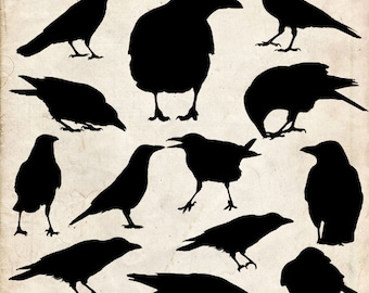 Crow Silhouette ,20 png Clipart , Instant Download,  clipart