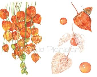 Fine Art Physalis print Giclée A4 21 x 30 cm of my watercolor illustration