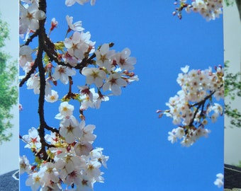 Blossom Greetings Card - Blank. Blue Sky and Blossom Photograph. Notelets. Gift set.