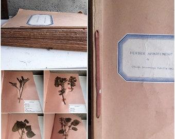 Vintage 1950S French Herbarium Album  Collectible Art Origin France