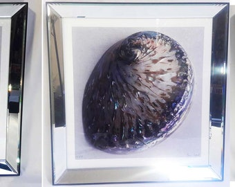 Collection of 3 High Quality Custom Seashell Prints in Beveled Mirror Frames by Ben Wood