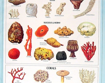 Solar System, Sponges and Corals - 2 Sided 1972 Vintage Dictionary Book Page