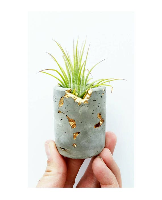 Concrete Gold Filigree Air Planter, Modern Metallic planter, Cactus Planter, Cactus Decor, Succulent Planter, Indoor Planter, Desk planter