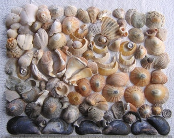 106 Natural Sea Shells Shell Fragments Art Mosaic Craft Supplies (1733)