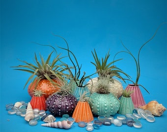 Small Air Planter, Sea Urchin Collection, Whimisical Sea Gift, Tide Pool on Your Desk
