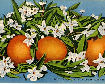 Oranges and Blossoms in Sunny Florida Vintage Botanical Postcard (unused)