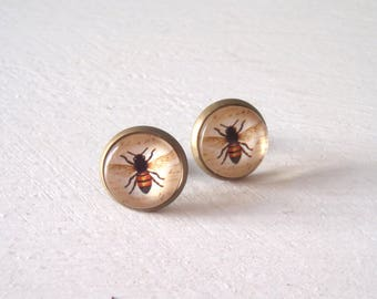 Bee Bug Insect Earrings studs vintage illustration