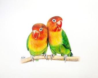Lovebird colored pencil drawing ORIGINAL