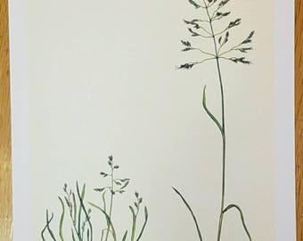 Vintage lithograph Kentucky Blue grass