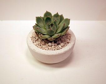 Concrete bowl modern for succulent or cactus