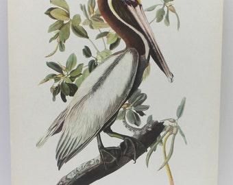 vintage Brown pelican image,vintage bird image,pelican image,Brown Pelican,vintage birds,man cave gift,man gift,home decor,