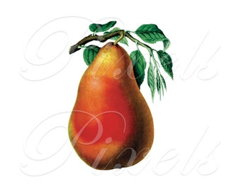 PEAR Instant Download pixelstransfer digital collage sheet yellow orange fruit clipart digital 144