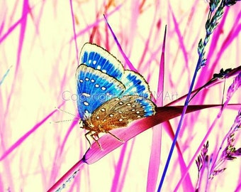 Pink Dream - fine art photograph - dreamy surreal vibrant happy color butterfly nature wall art - office or home decor