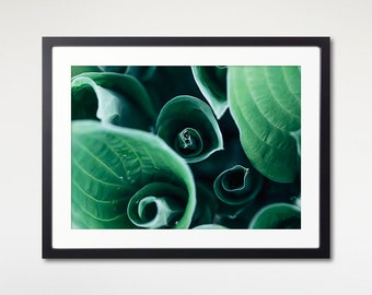 Hosta Leaves Art, Framed Print, Green Wall Photo, Ready To Hang, Plant Print, Nature Wall Decor, Leaf Art Print