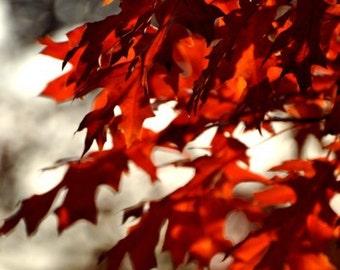 Fine Art Photography, Magical Copper, red Autumnal Leaf, Digital Photo Print, 8 x 12, 16 x 24, 12 x 18, Fall Home Decor, Glowing Wall Art