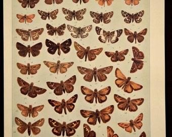 Nature Print Butterflies Antique Butterfly Wall Decor Art