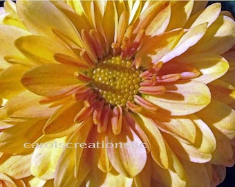 Nature Photography - Yellow Mum - flower, mum, green, stem, close up photography, fragrance, flower stem, 8x12