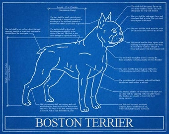 Boston Terrier Blueprint Elevation / Boston Terrier Art / Boston Terrier Wall Art / Boston Terrier Gift / Boston Terrier Print